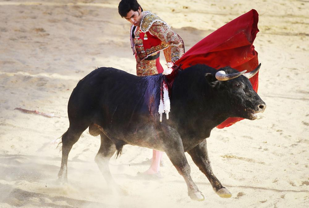 Mexicans Celebrates 500-yrs old tradition of bullfighting