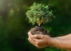 Contribute consciously to save the environment