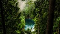 Amazonian Forests