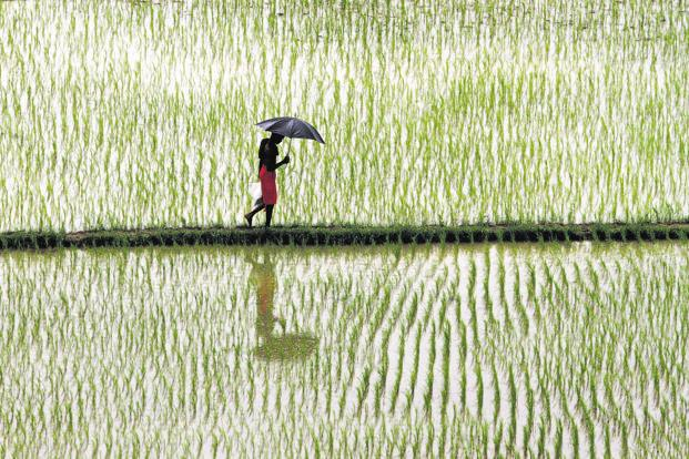 Uncertain earnings for agricultural input firms despite bountiful rains
