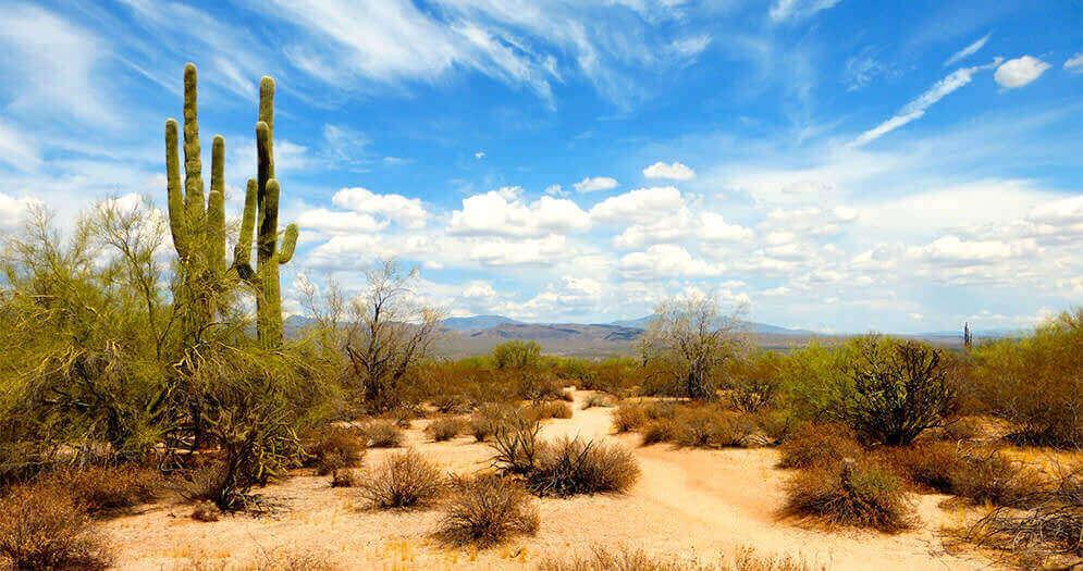 Sommoran Desert