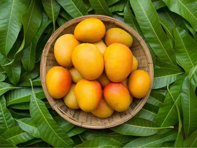 National Fruit of India Mango